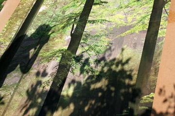 Jungian woods
